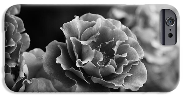 Floribunda iPhone Cases - Ruffles iPhone Case by Linda Lees