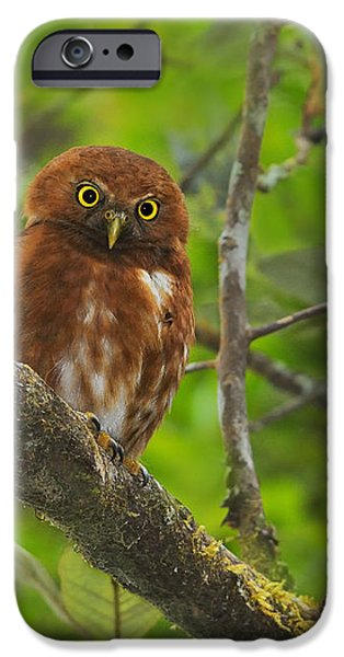 Rufous Morph Costa Rican Pygmy-Owl iPhone Case by Tony Beck