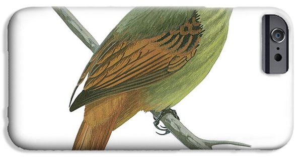 Animal Drawings iPhone Cases - Rufous tailed flatbill  iPhone Case by Anonymous