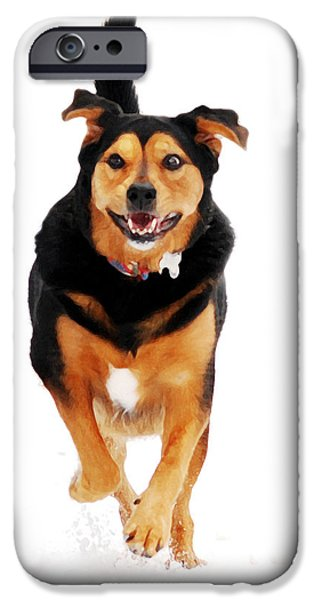 Black Dog iPhone Cases - Running Dog Art iPhone Case by Christina Rollo