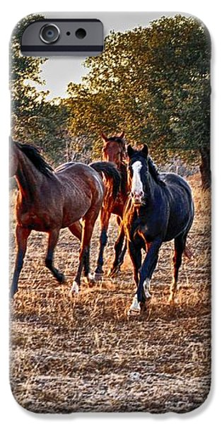 Running Horses iPhone Case by Kristina Deane