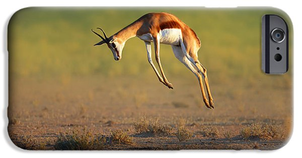 Run iPhone Cases - Running Springbok jumping high iPhone Case by Johan Swanepoel