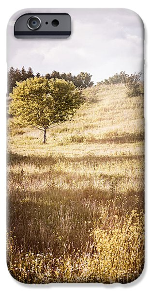 Meadow Photographs iPhone Cases - Rural landscape with single tree iPhone Case by Elena Elisseeva