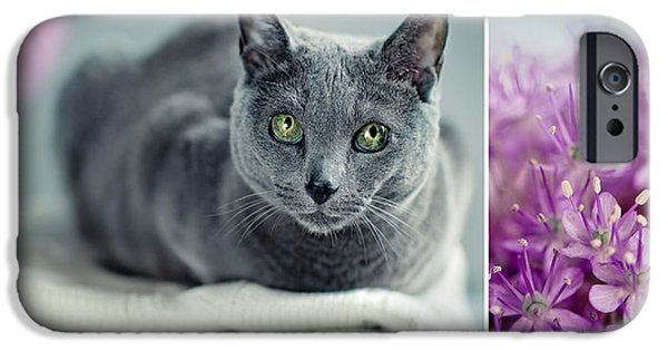 Housecat iPhone Cases - Russian Blue Collage iPhone Case by Nailia Schwarz