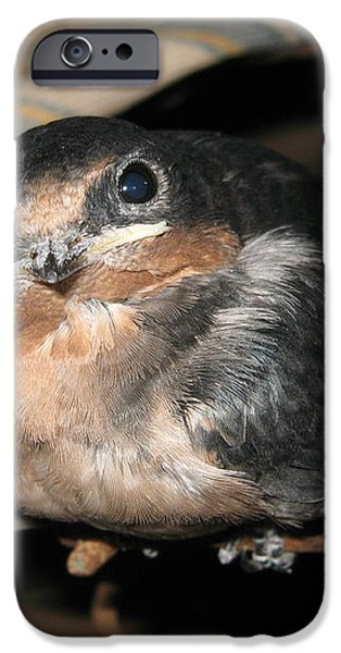 Rusted Perch - Baby Barn Swallow  iPhone Case by Christena  Stephens