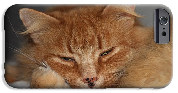 Pictures Of Cats Photographs iPhone Cases - Rusty 2 iPhone Case by Linda Kozachenko
