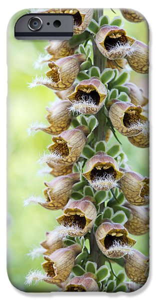Foxglove Flowers Photographs iPhone Cases - Rusty foxglove iPhone Case by Tim Gainey