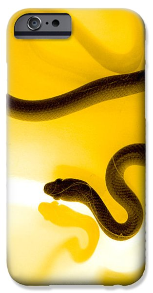 Animal Photographs iPhone Cases - S iPhone Case by Holly Kempe