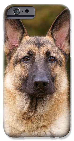 Alsatian iPhone Cases - Sable German Shepherd Dog iPhone Case by Sandy Keeton