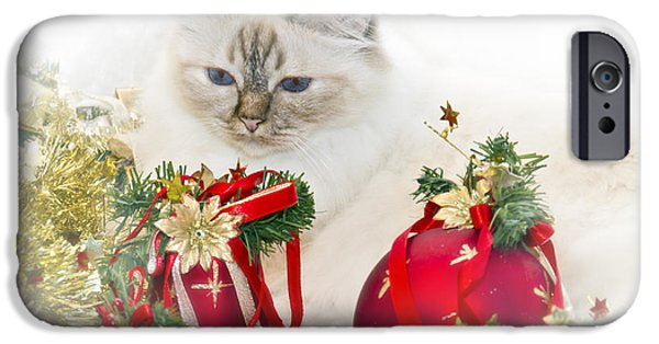 Familiar iPhone Cases - Sacred Cat of Burma CHRISTMAS TIME II iPhone Case by Melanie Viola