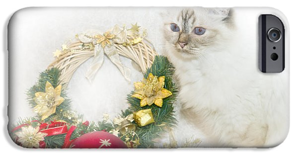 Familiar iPhone Cases - Sacred Cat of Burma CHRISTMAS TIME iPhone Case by Melanie Viola
