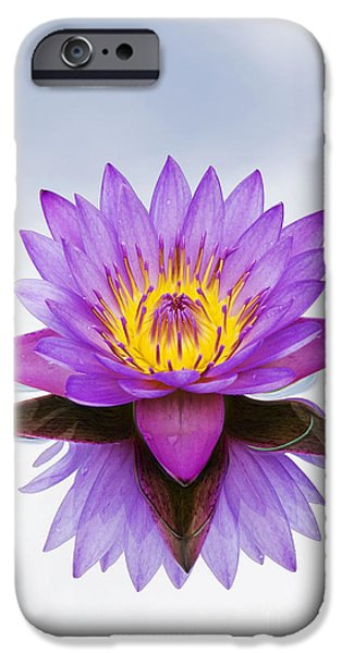 Aquatic Plants iPhone Cases - Sacred Indian Blue Lotus Flower iPhone Case by Tim Gainey
