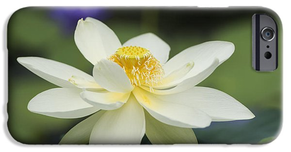 Anther iPhone Cases - Sacred Lotus  iPhone Case by Tim Gainey
