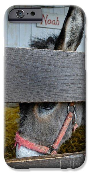 Sad Donkey iPhone Case by Amy Cicconi