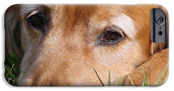 Dog Photos iPhone Cases - Sad Golden Retriever dog iPhone Case by Dog Photos