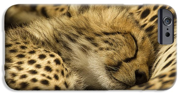 Animals Photographs iPhone Cases - Safe With Mom iPhone Case by Sharon Ely