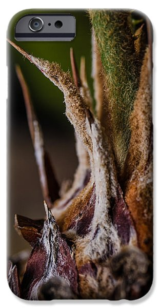 Multimedia iPhone Cases - Sago Palm 1 iPhone Case by Frank Mari
