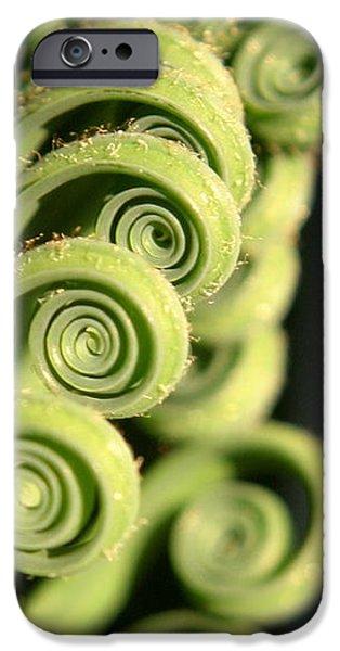 Sago Palm Leaf - 3 iPhone Case by Kenny Glotfelty