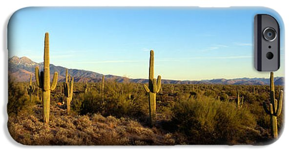 Mountain iPhone Cases - Saguaro Cacti In A Desert, Four Peaks iPhone Case by Panoramic Images