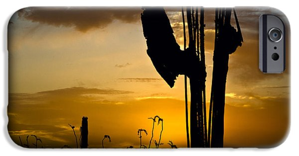 Silhoette iPhone Cases - Saguaro Sunset Silhoette  iPhone Case by Dave Dilli