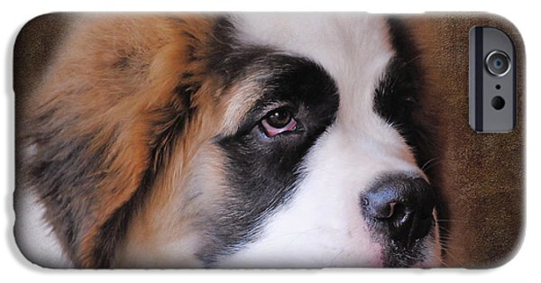 Cute Puppy iPhone Cases - Saint Bernard Puppy iPhone Case by Jai Johnson