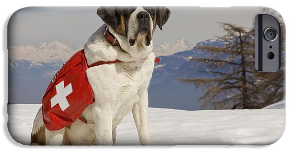 Dog In Landscape iPhone Cases - Saint Bernard Rescue Dog iPhone Case by Jean-Michel Labat