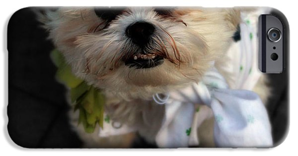 Dogs Digital Art iPhone Cases - Saint Patricks Day  iPhone Case by Steven  Digman