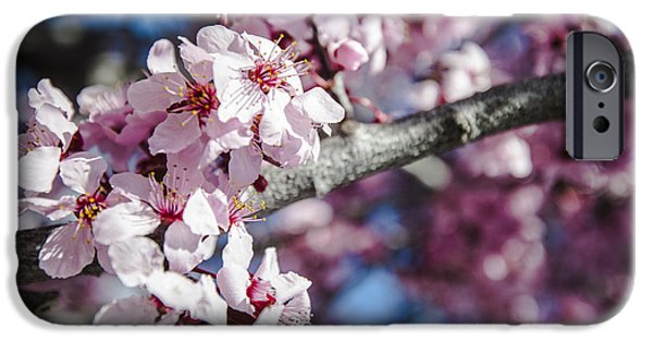 Prescott Arizona iPhone Cases - Sakura Blossoms iPhone Case by Anthony Citro