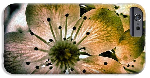 Cherry Art iPhone Cases - Sakura - Cherry Blossom iPhone Case by Marianna Mills