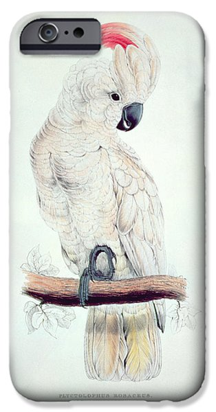 Ornithology iPhone Cases - Salmon Crested Cockatoo iPhone Case by Edward Lear