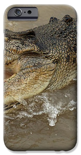 Saltwater Crocodile iPhone Case by Bob Christopher
