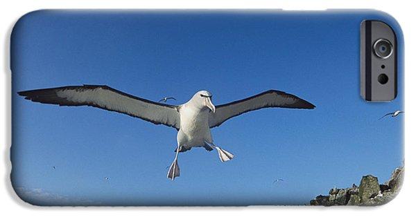 Albatross iPhone Cases - Salvins Albatrosses Bounty Islands iPhone Case by Tui De Roy