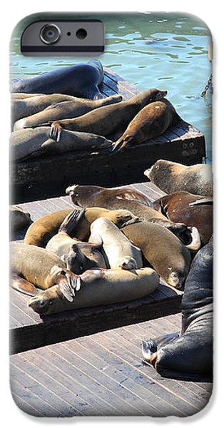 San Francisco Pier 39 Sea Lions 5D26113 iPhone Case by Wingsdomain Art and Photography
