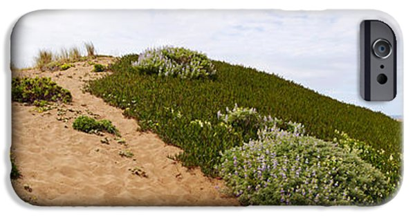 Sand Dunes iPhone Cases - Sand Dunes Covered With Iceplants iPhone Case by Panoramic Images
