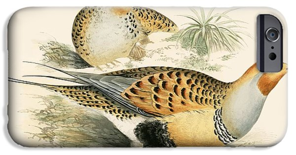Hunting Bird iPhone Cases - Sand Grouse iPhone Case by Beverley R. Morris