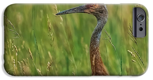 Sea Birds iPhone Cases - Sand Hill Crane iPhone Case by Paul Freidlund