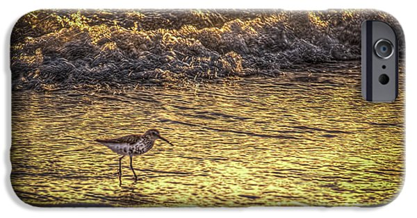 Sea Birds Photographs iPhone Cases - Sand Piper iPhone Case by Marvin Spates