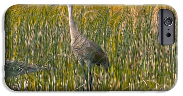 Recently Sold -  - Garden Scene Paintings iPhone Cases - Sandhill crane 2 iPhone Case by Lanjee Chee