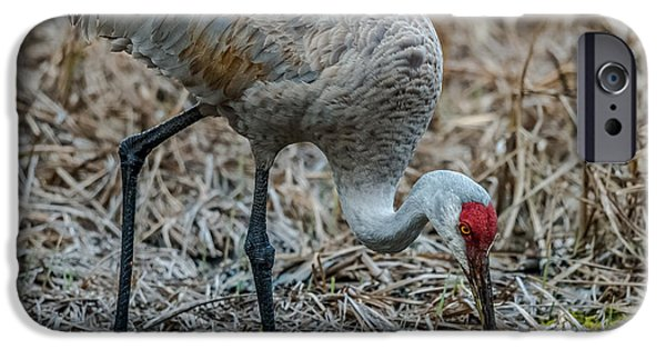 Sea Birds iPhone Cases - Sandhill Crane iPhone Case by Paul Freidlund