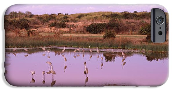 Reflections Of Sky In Water iPhone Cases - Sandhill Cranes Grus Canadensis iPhone Case by Panoramic Images