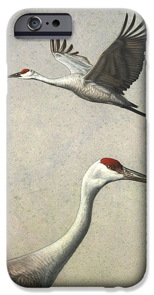 Flight iPhone Cases - Sandhill Cranes iPhone Case by James W Johnson