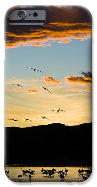 Sandhill Cranes in New Mexico iPhone Case by William H Mullins
