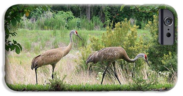 Florida Wildlife iPhone Cases - Sandhills through the Crepe Myrtles iPhone Case by Carol Groenen