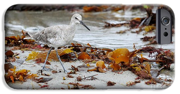 Sea Birds iPhone Cases - Sandpiper iPhone Case by Henrik Lehnerer