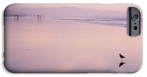 Sea Birds iPhone Cases - Sandpiper On The Beach, San Francisco iPhone Case by Panoramic Images