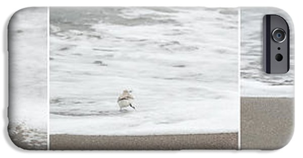 Sea Birds iPhone Cases - Sandpiper Sequence iPhone Case by Michelle Wiarda