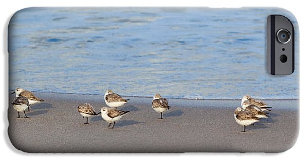 Michelle iPhone Cases - Sandpiper Siesta iPhone Case by Michelle Wiarda