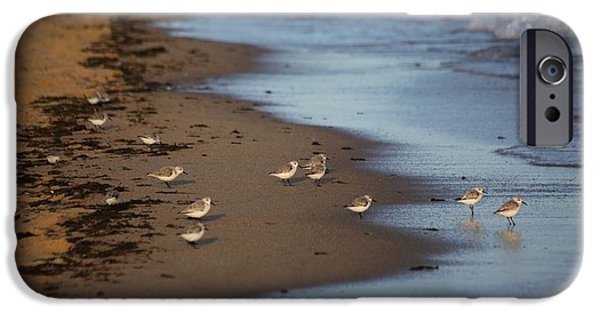 Mashpee iPhone Cases - Sandpipers 3 iPhone Case by Allan Morrison