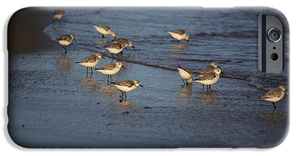 Mashpee iPhone Cases - Sandpipers 5 iPhone Case by Allan Morrison