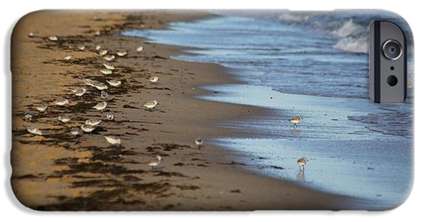 Mashpee iPhone Cases - Sandpipers iPhone Case by Allan Morrison